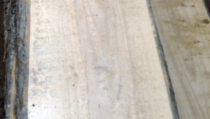 Дуб (необрезной) 20 мм